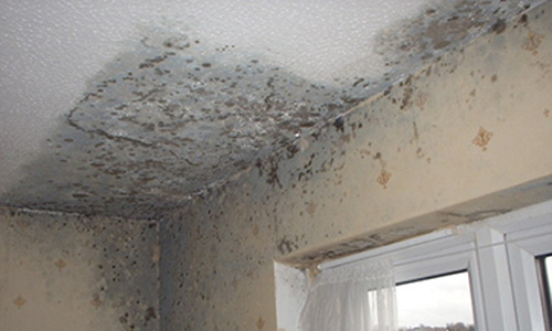 Mould Remediation Mould Can Grow On Virtually Any